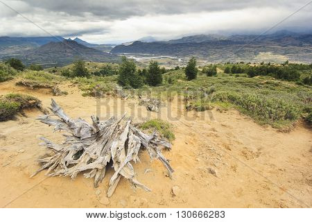 big old stump on  yellow sand in chilean mountains of patagonia with green forest and clouds on sky