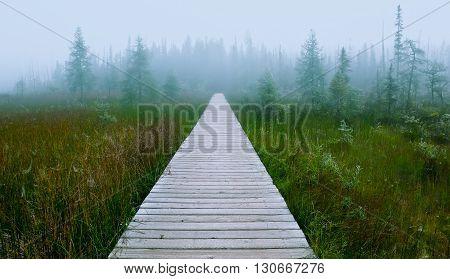 Infinite Path Ii