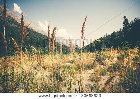 Summer Landscape valley and forest in mountains serene scenic view