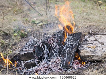 bonfire of wood burning in the forest