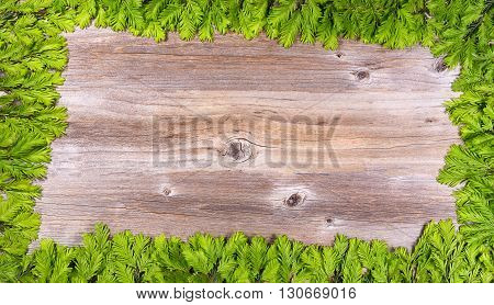 Christmas or New Year border decoration complete border of frame background with new fir tree branch tips on rustic wood. Plenty of copy space in center the tree branch rectangle border.
