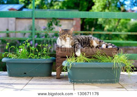 Portrait Of Domestic Tabby Cat On Terrace