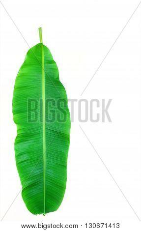 Fresh Banana Leaf Isolated On White Background