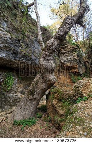 Tree Root View