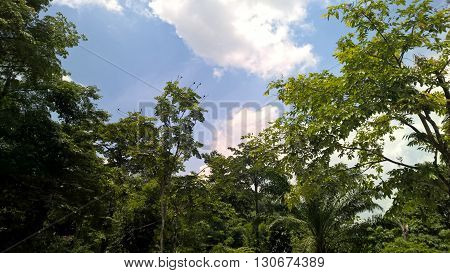 Khao Sok National Park landscape in Thailand, trees and sky