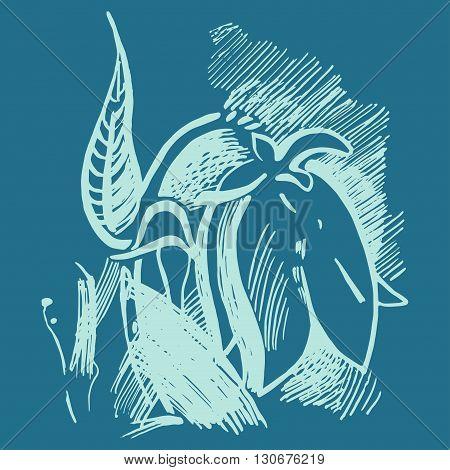 Bluebell Flower Graphic Illustration. Campanula Drawing.