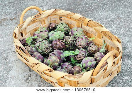 Roman artichokes in woven basket on gray