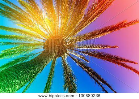 Palm Tree outdoors concept, San Diego, California