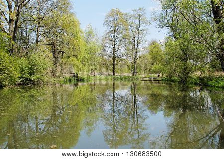 trees on the bank of a pond in Poodri reflecting on the water surface in spring