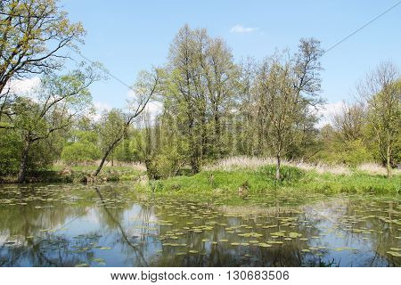 pond in Poodri, Czech Republic with trees on its banks and some leaves of water lilly on the water surface on sunny spring day