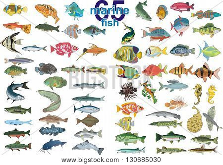 Set - 65 marine fish. Vector illustration on a transparent background