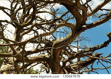 selective focus. dark curved thick tree branches. natural wooden background