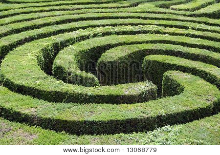 Maze Made From A Hedge