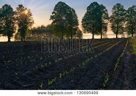 Spring countryside landscape. Sun riser over new green field. Masuria. Poland.