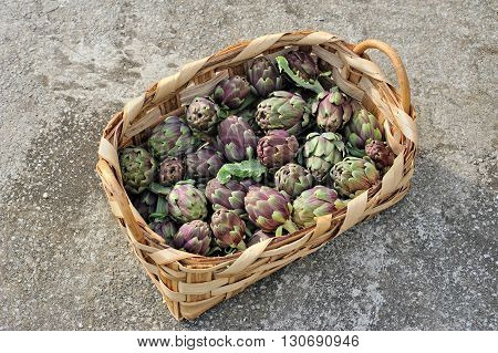 Roman artichokes in woven basket on gray background