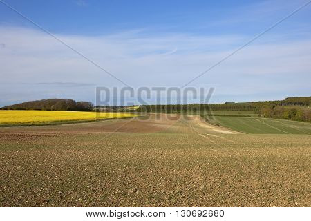 Springtime Crops In The Yorkshire Wolds