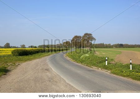 Country Lane With Oak Trees