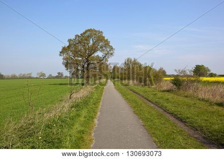 Cycleway In Springtime