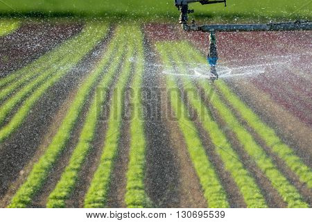 Watering and irrigation system, modern irrigation in a salad field