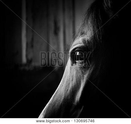horse eye in the dark in monochromatic colors