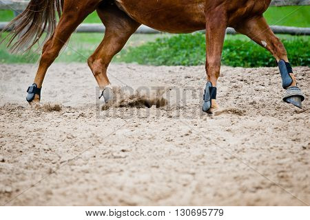 horse galloping in paddock, hooves close up