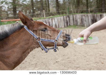 Foals Fed