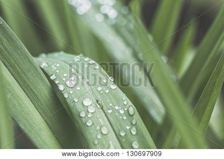 Rain Drops on small Plant after a Rainstorm macro