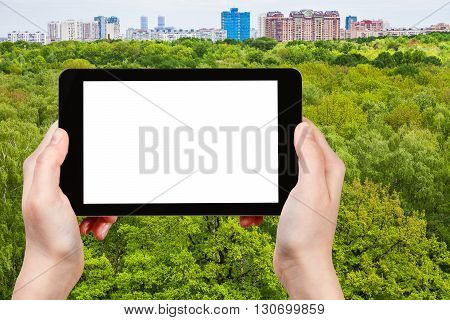 Tourist Photographs Green Trees In Summer Forest
