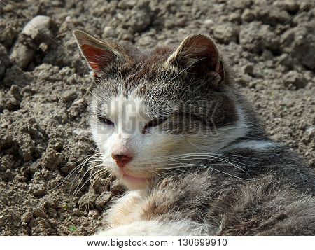 happy catcats detail  , pet, tomcat ,