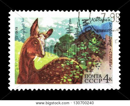SOVIET UNION - CIRCA 1975 : Cancelled postage stamp printed by Soviet Union, that shows Siberian Musk Deer.