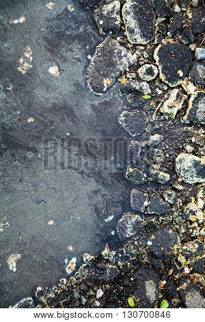 Birch Pollen On Stone And Surface Of Puddle
