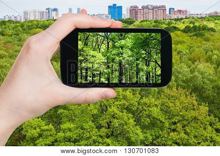 Tourist Photographs Oak Trees In Green Forest