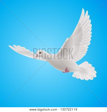 Flying white dove on blue background. Symbol of peace