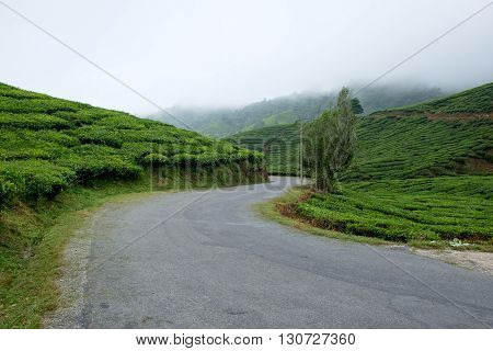 Winding road with tea plantation and fog in Cameron Highlands Malaysia.