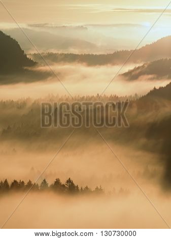 Colorful Fogy Daybreak. Misty Awakening In A Beautiful Hills. Peaks Of Hills Are Sticking Out From F