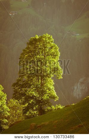 Lonely tree , Swiss Alps - snow capped mountains and deep valleys stunning view breath-taking panorama