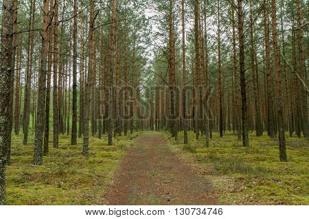 The Trail Through Woods