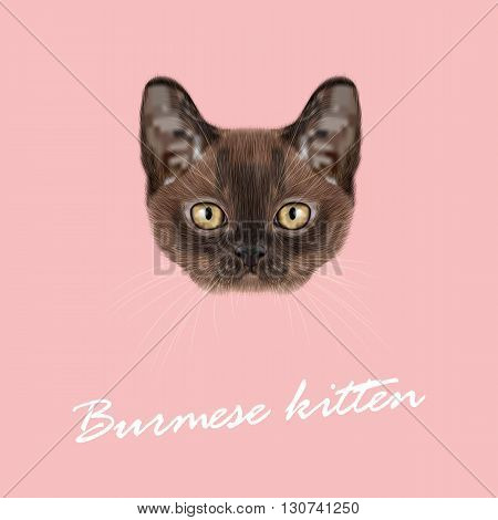 Vector Illustrated Portrait of Burmese kitten. Cute Sable face of domestic cat on pink background.