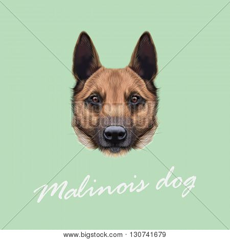 Vector Illustrated Portrait of Malinois dog. Cute face of Shepherd dog on beige background.