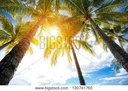 Low angel view of palm trees over beautiful sunny sky
