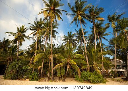 Wild lagoon with palm trees, beautiful green area by the sea