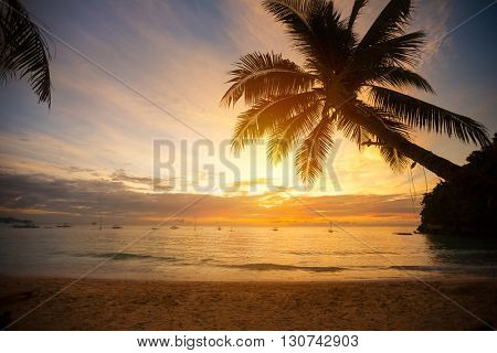 Palm tree leaves over sunset beach