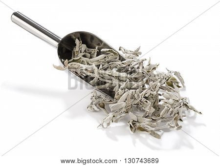 Metallic scoop with sage tea plant isolated on white background.