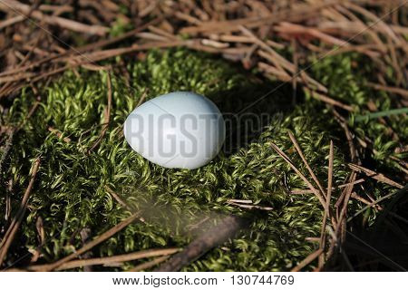 little blue color egg of wild starling lay on moss in forest