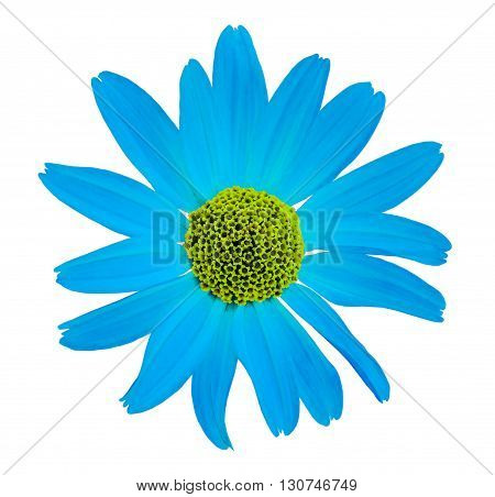 Flower white isolated background with clipping path. no shadows. Closeup with no shadows. Nature. Cyan yellow.