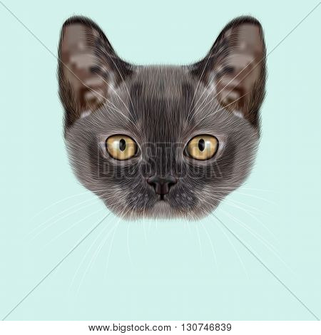 Illustrated Portrait of Burmese kitten. Cute blue face of domestic cat on blue background.