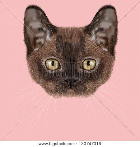 Illustrated Portrait of Burmese kitten. Cute Sable face of domestic cat on pink background.