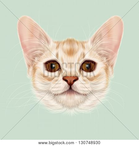 Illustrated portrait of Somali kitten. Cute fluffy face of domestic cat on green background.
