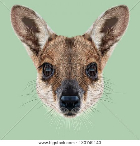 Illustrated Portrait of Wallaby. Cute face of wild Australian mammal Wallaby on green background.