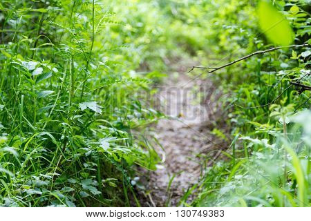 Trail In The Grass